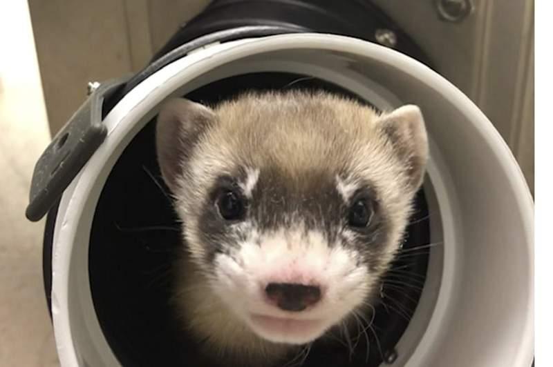 FILE PHOTO (U.S. Fish and Wildlife Service via AP)