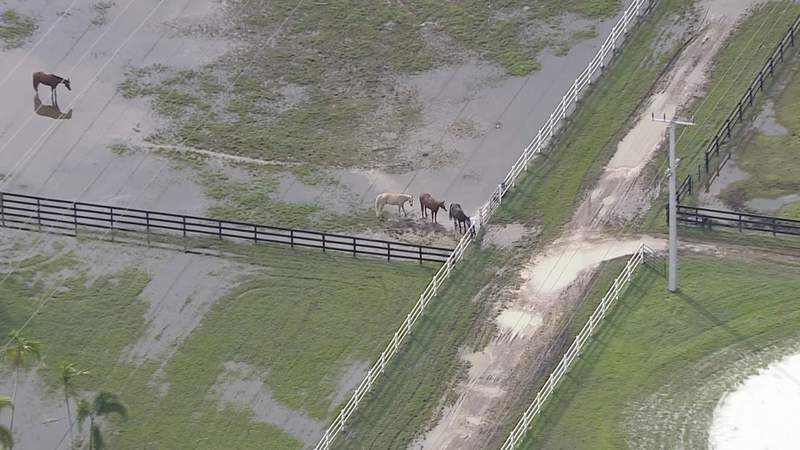 Sky 10 over horses standing in muddy water in Southwest Ranches.