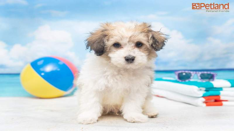 Puppy dies after man steals it from Broward store