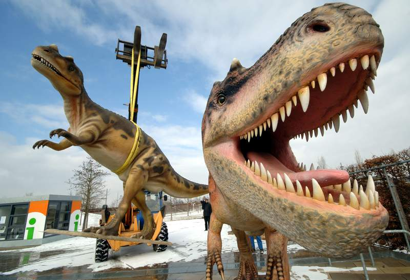FILE - In this Tuesday, March 7, 2006 file photo, life-sized Tyrannosaurus rex models are unloaded for a dinosaur exhibition in Potsdam, Germany. A study released on Thursday, April 15, 2021 calculates that 2.5 billion Tyrannosaurus rex prowled North America over a couple million years or so, with maybe 20,000 at any given time. (AP Photo/Sven Kaestner)