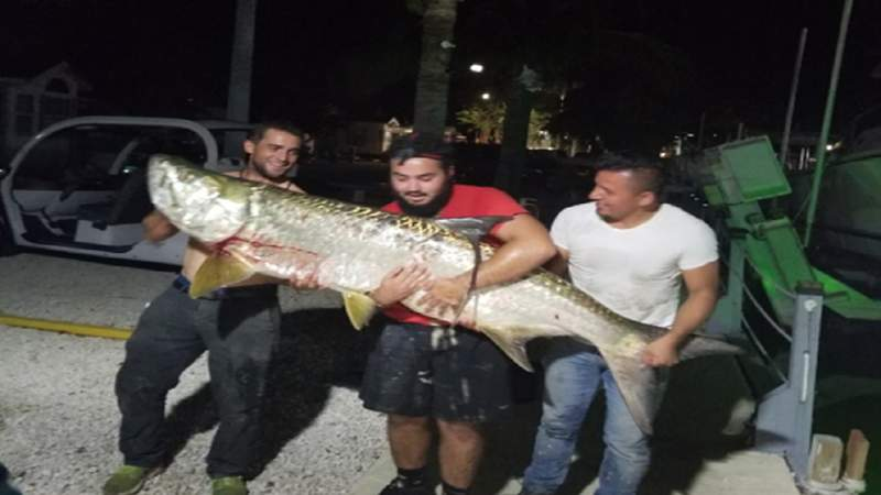 The FWC says these three men illegally killed a tarpon in the Florida Keys.