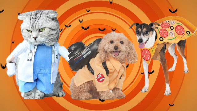16 Of The Cutest Ever Dog Cat Costumes For Halloween