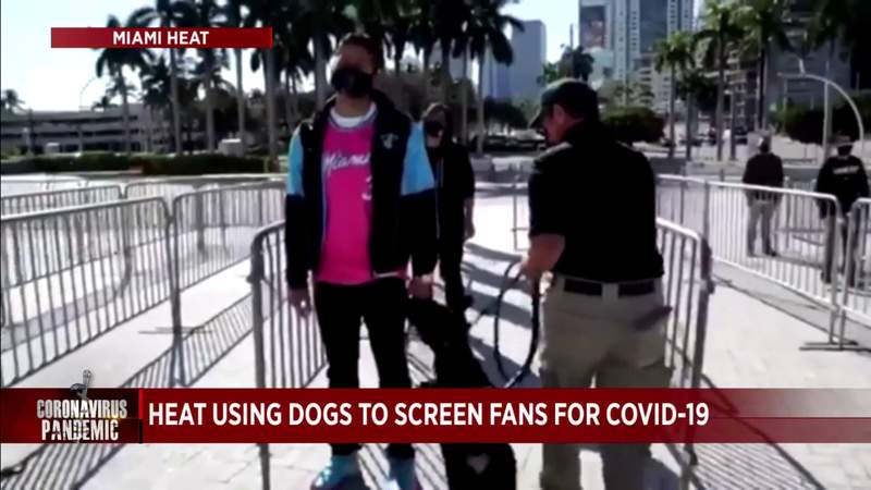 Dogs will sniff Miami Heat fans for COVID-19 before games