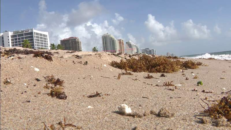 White substance on Fort Lauderdale beach could be dangerous for dogs