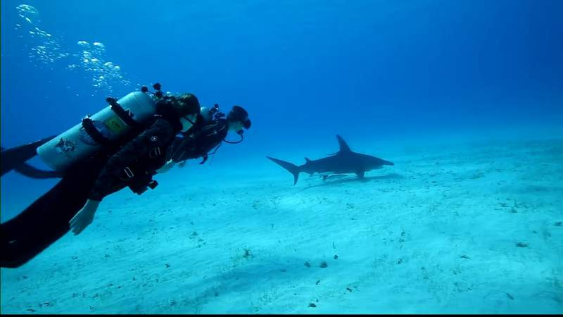 Grandson of Jacques Cousteau speaks about ocean conservation on World Oceans Day