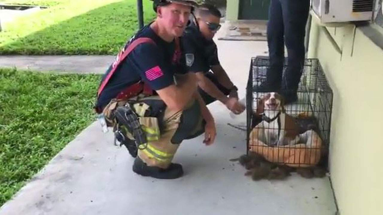 Firefighters rescue dog from 'heavy' fire in Fort Lauderdale