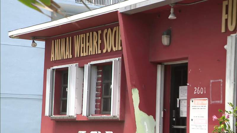 Animal Welfare Society helps pet owners to afford veterinary care