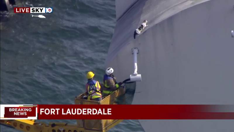 Cat scampers to safety after hanging out on bridge post in Fort Lauderdale
