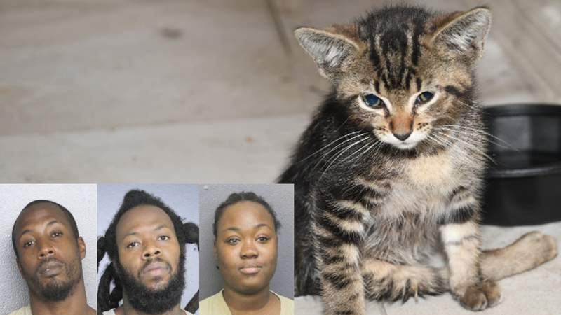 Three people face charges in the attack of a kitten in Hollywood.