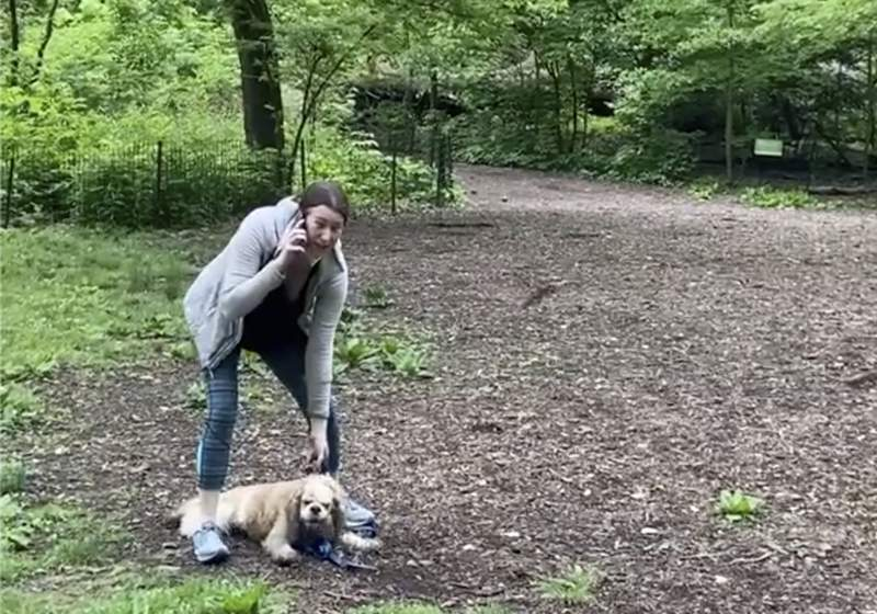 FILE -  This May 25, 2020 file image, taken from video provided by Christian Cooper, shows Amy Cooper with her dog calling police at Central Park in New York. Amy Cooper, the white woman arrested last spring for calling 911 during a dispute with a Black man in New York's Central Park, had her criminal case dismissed Tuesday, Feb. 16, 2021, after completing a counseling program meant to educate her on the harm of her actions. (Christian Cooper via AP, File)