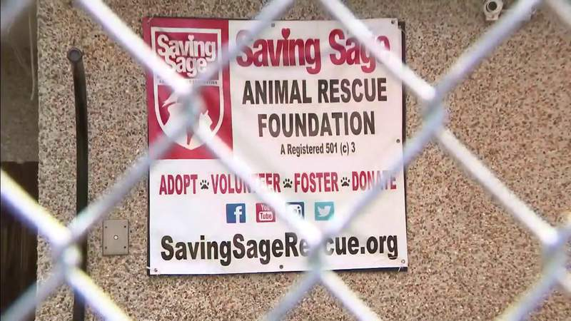 Cats found abandoned in a Sunrise apartment will be up for adoption.