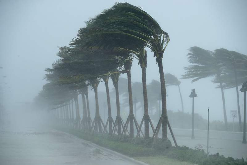 Trees bend in the tropical storm winds along North Fort Lauderdale Beach Boulevard as Hurricane Irma hits the southern part of the state (2017 file photo).