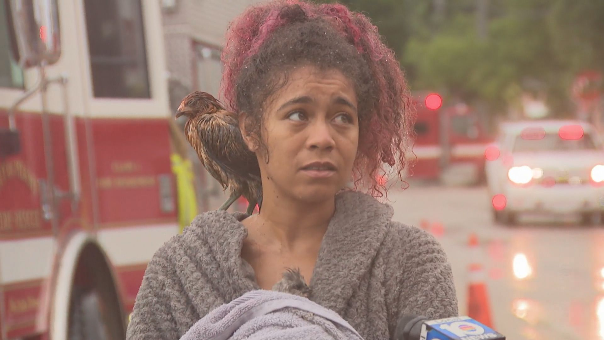 Miami house fire displaces three people, including woman with eight pet chickens