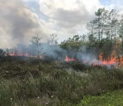 Fire at Everglades National Park.