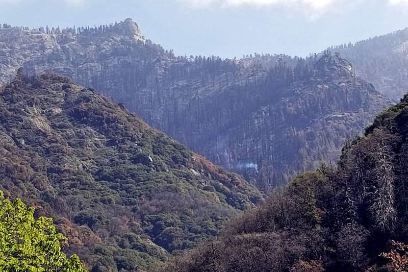 ARCHIVO - En esta fotografa del 22 de abril de 2021 proporcionada por el Servicio de Parques Nacionales de Estados Unidos se muestra un rbol que saca humo en el Parque Nacional de las Secuoyas, en California. (Tony Caprio/Servicio de Parques Nacionales va AP, Archivo)