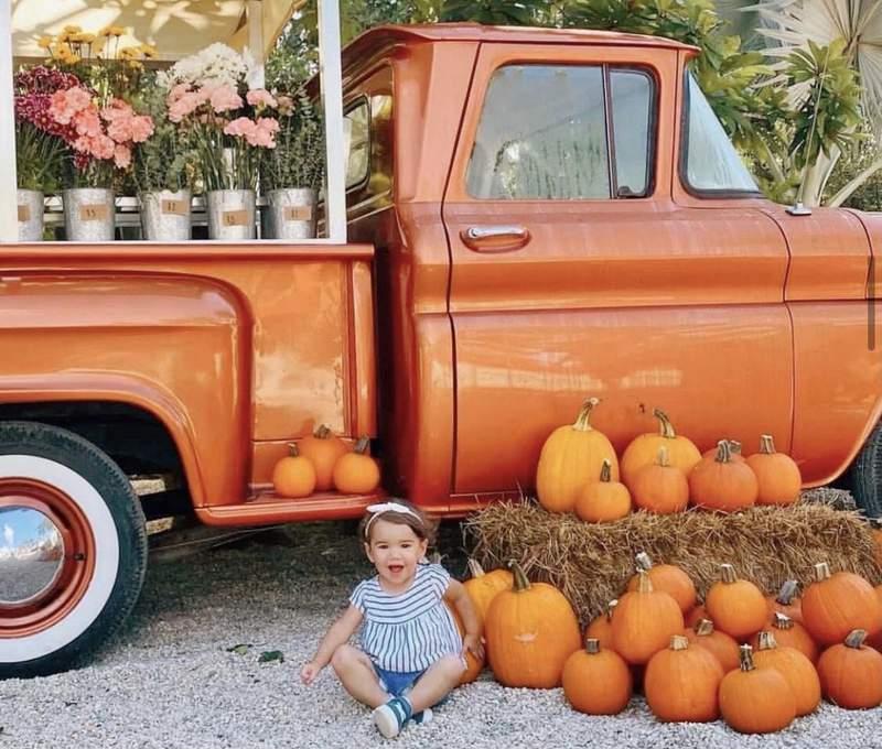 Pumpkin patch festivities at Pinto's Farm.