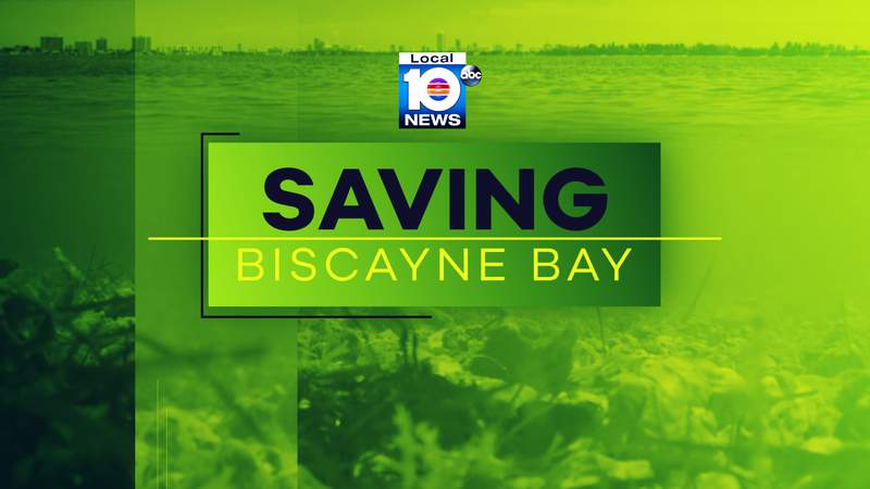 """""""Saving Biscayne Bay"""" aired Wednesday on Local 10 and you can watch a replay below."""