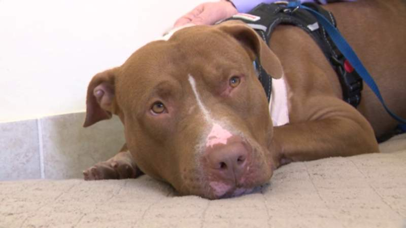 Dog found living in abandoned warehouse; had puppy collar embedded in neck