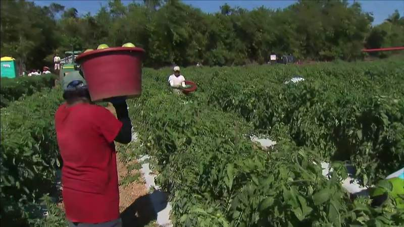 Florida's governor attributes rising coronavirus numbers due to agriculture worker counts