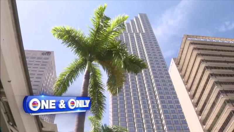 FBI raids Miami office during probe linked to Ukrainian billionaire's alleged 'Optima Schemes'