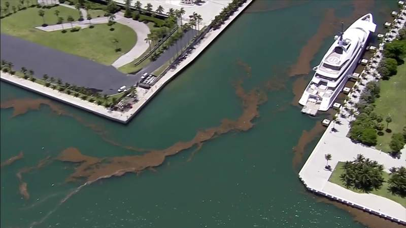 No swim warning remains in effect for parts of Biscayne Bay