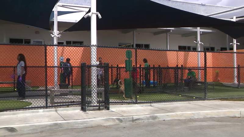 Animal shelters in Miami-Dade and Broward making changes due to coronavirus crisis