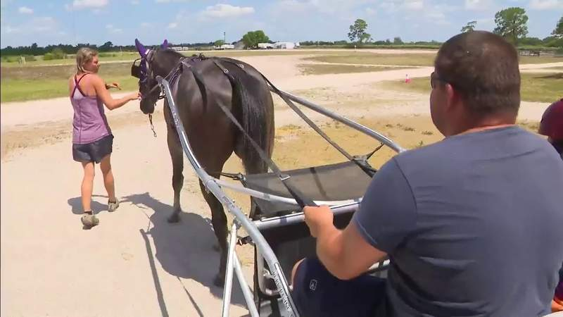Harness racing at Pompano Beach track could be coming to an end