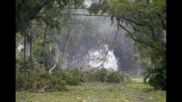 Debris fills the tree-lined streets of a residential area, Sunday, in Coral Gables. Photo by Wilfredo Lee/The Associated Press