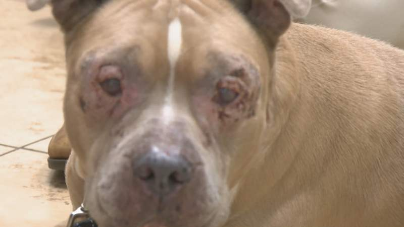 A dog named Rocky was found abandoned in a warehouse area in Hollywood with seriously infected eyes.