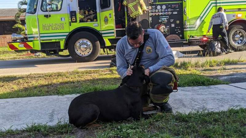 Firefighters rescued a dog from a house fire on Monday afternoon.