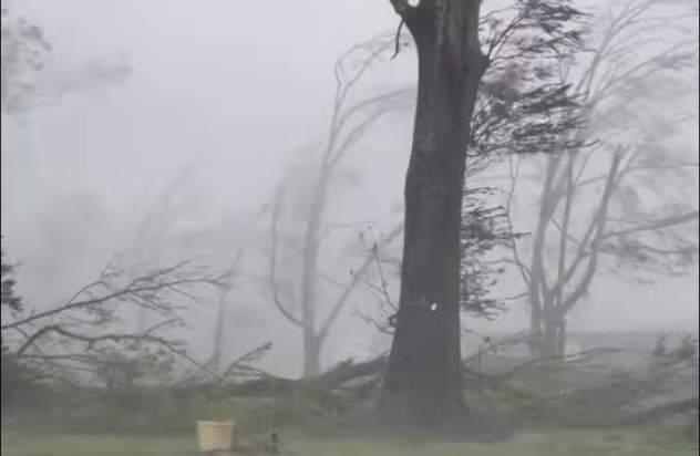 Trees in Louisiana are being ripped apart due to Hurricane Ida.
