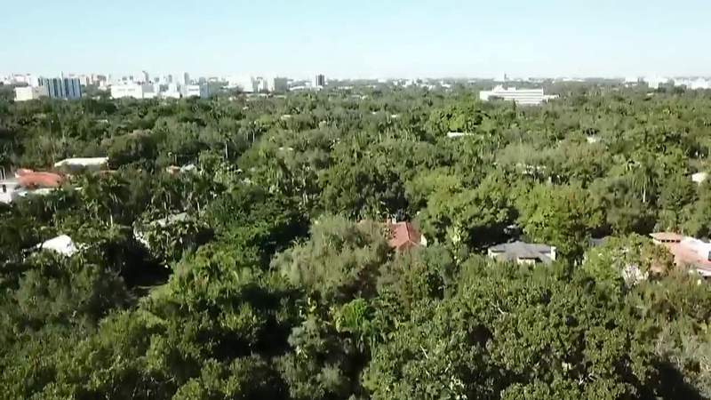 GF Default - Resident of Coconut Grove fear loss of green space, traffic grid lock