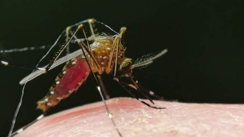 There's no evidence that mosquitoes can spread COVID-19 but they will likely still be a nuisance this spring and summer.