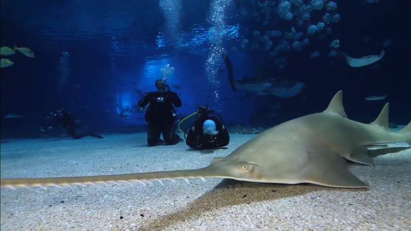 LifeWaters gives disabled veterans a chance to dive