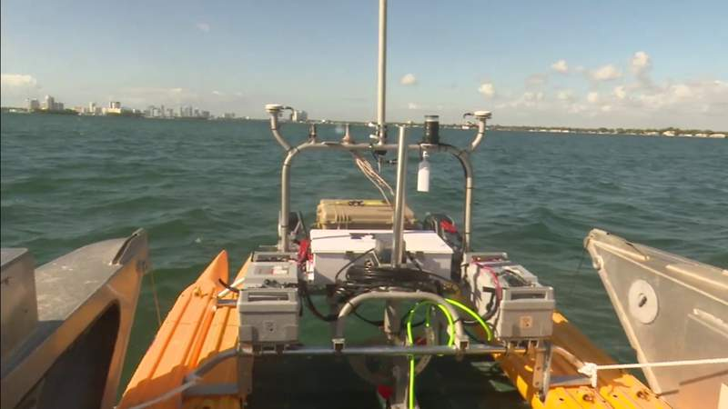 Saving Biscayne Bay: Researchers worry about another fish kill this summer