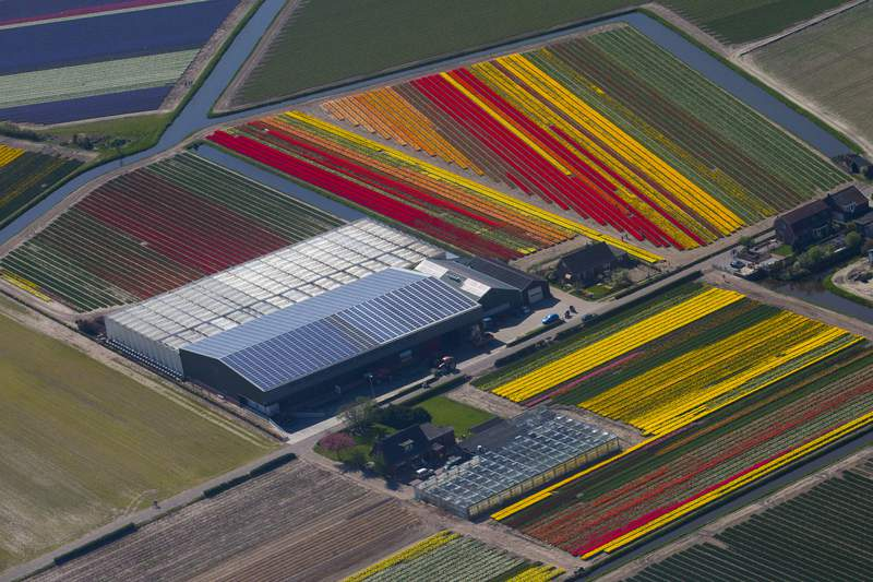 -FILE- In this Friday, April 20, 2018 file image fields of flowers are left to bloom to cultivate the bulbs around spring garden de Keukenhof in Lisse, west central Netherlands. Dutch agriculture exports rose 4.6% in 2019 from the previous year to a new record of 94.5 billion euros ($105.2 billion), the country's statistics office and an economic research organization said Friday, Jan. 17, 2020. Flowers, plants and bulbs were the highest value exports, totaling 9.5 billion euros. (AP Photo/Peter Dejong, File)