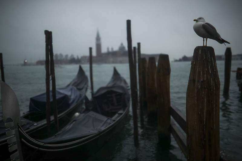 FILE - In this Sunday, March 1, 2020 file photo, a seagull stands on a pole next to parked gondolas at the lagoon on a rainy day in Venice. Activists opposed to cruise ships in Venice are seeking a meeting with the Italian government to argue that its latest proposal to re-route big ships away from St. Marks Square doesnt address pressing environmental concerns about the fragile Venetian lagoon. (AP Photo/Francisco Seco, File)