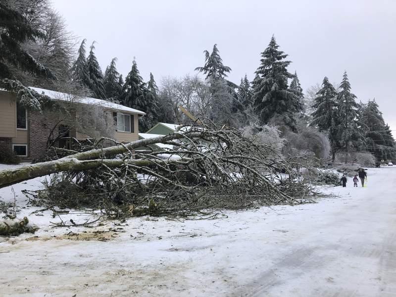 Varias personas pasan por un rbol cado en Lake Oswego, Oregon, el sbado 13 de febrero de 20021, debido a una tormenta que cubri de hielo y nieve la zona, dejando a cientos de miles de personas sin electricidad en la regin noroccidental de Estados Unidos frente al Pacfico. (AP Foto/Gillian Flaccus)