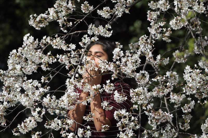 A woman smells cherry blossoms in Washington, D.C. before the coronavirus pandemic kept people indoors.