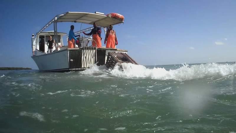 Commercial lobstermen working off the Florida Keys.